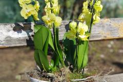 Blumengesteck(floral arrangement) #9 -Verfügbarkeit anfragen (request availability)
